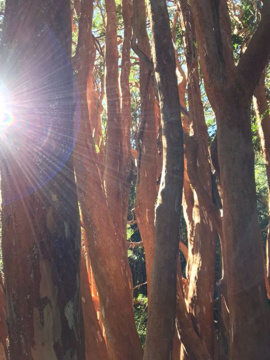 Light through the Arrayanes